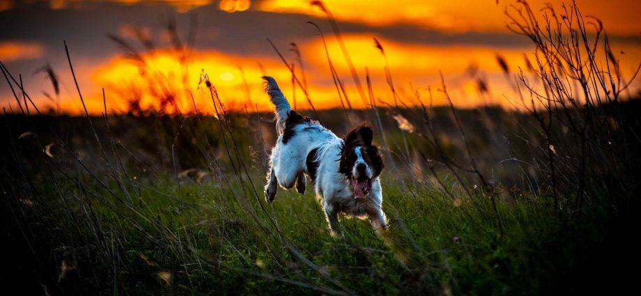 Ezért ne sétáltass az erdőben kutyát póráz nélkül!