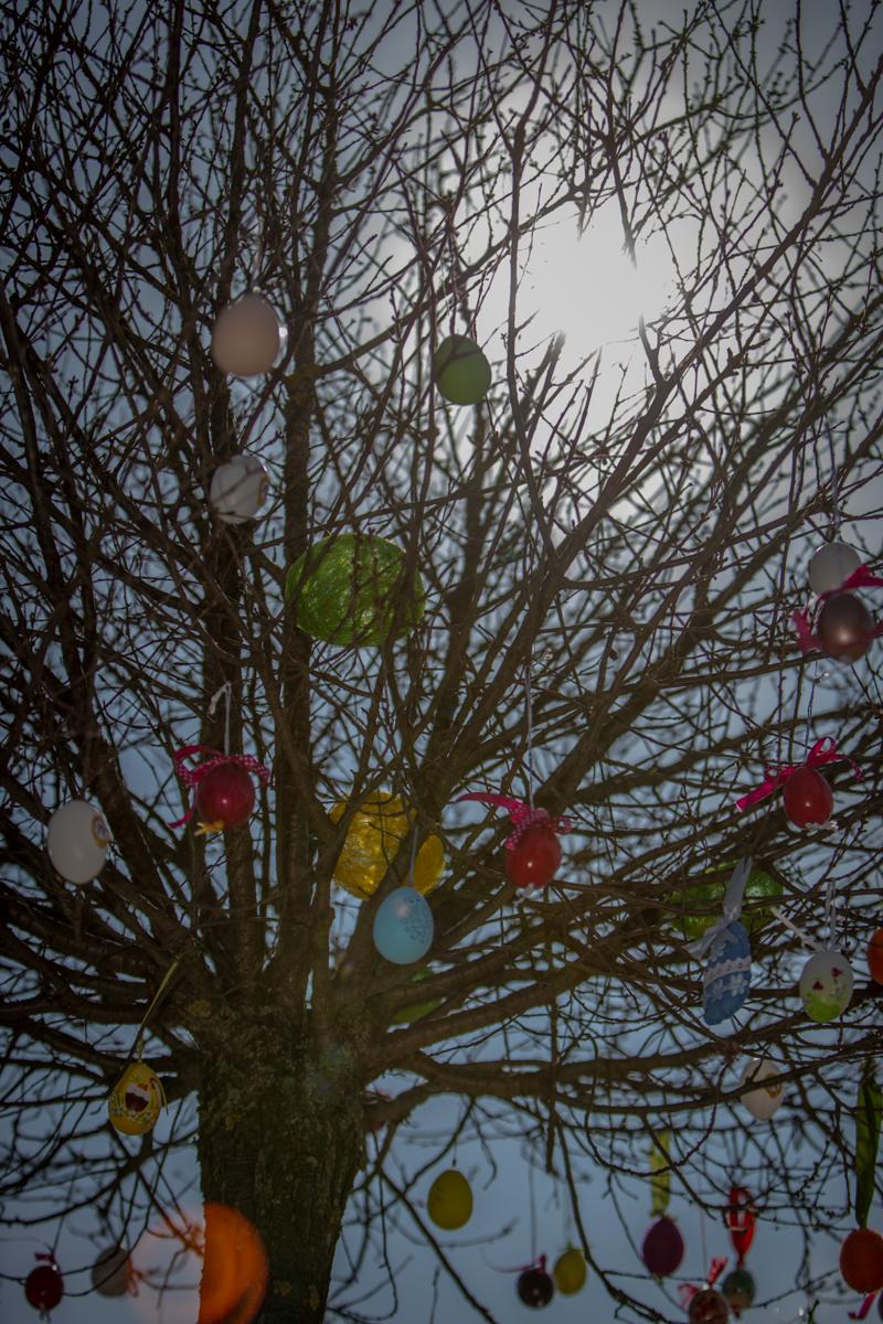 Így néz ki a húsvétváró mogyoródi tojásfa