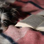 Könyvek a természet és az állatok szerelmeseinek
